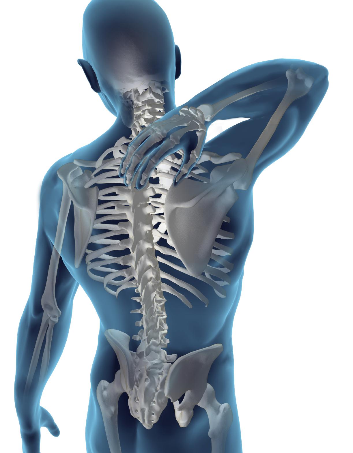 Full-Skeleton-Back-Pain1